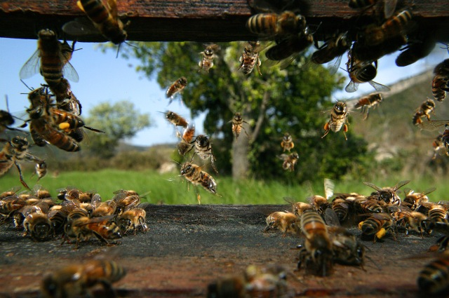 TOURNERET Vu de la ruche à Rocamadour.jpg