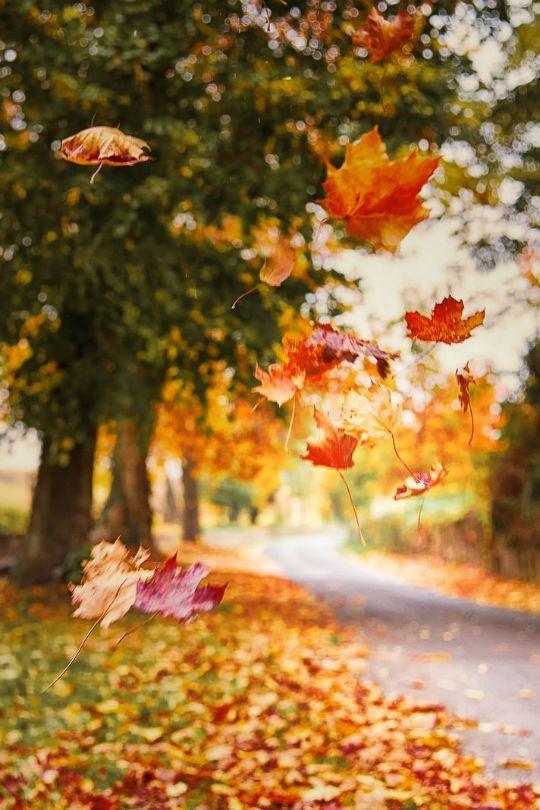 automne feuilles qui tombent.jpg