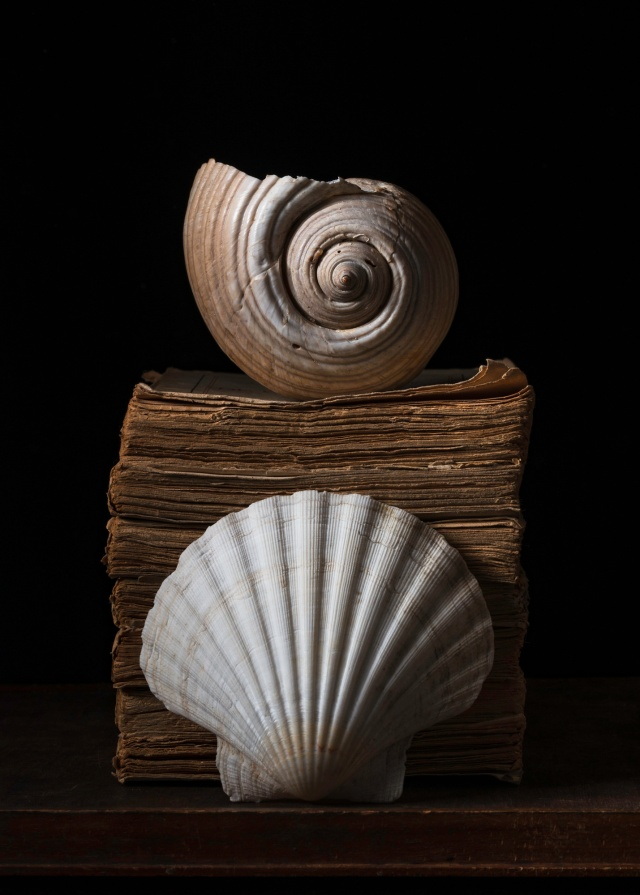 Shells and books still life by Benedict Ramos
