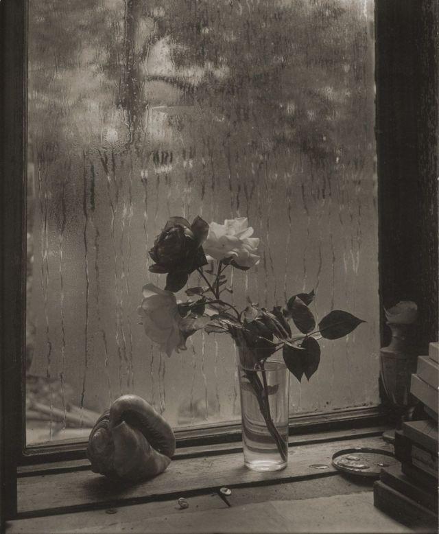 SUDEK Josef 1956 la dernière rose