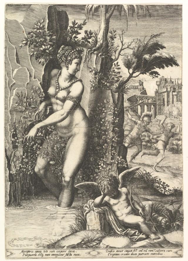 VENUS Piqué par une rose