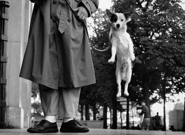 ERWITT Dog jumping 1989